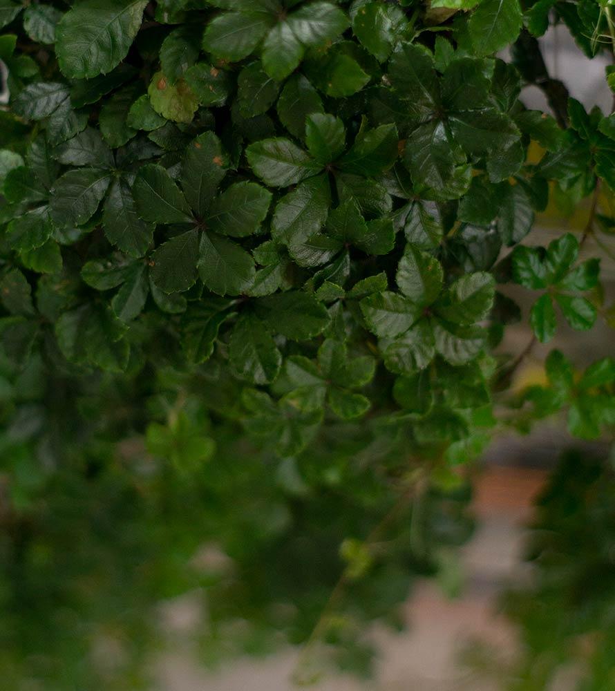 Terrarien Pflanzen im ATP-Terraristik